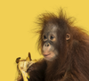 Monkey See, Monkey Do: How Mimicry Can Lead to Better Outcomes