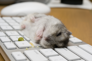 Hamster on a Dirty Keyboard